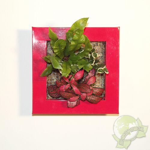 Cadre végétal Be Green Rouge 19x19cm avec Mix 3 Plantes tableau végétalisé