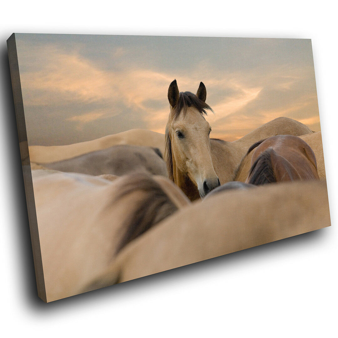 A293 braun Horses Sunset Cream Funky Animal Canvas Wall Art Large Picture Prints