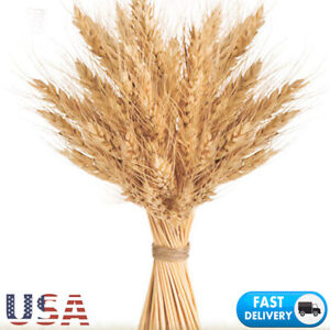 50x Natural Dried Flower Wheat Bouquet DIY Wedding Home Decor Wheat Branch Props
