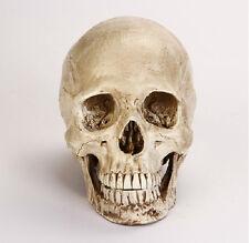 Large Human Skull Replica Resin Model Medical Realistic NEW 1:1 21cm*14cm*16cm