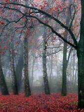 Photo Picture Poster Print Art A0 to A4 AD971 NATURE POSTER RED FOLIAGE FALL