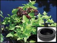 12 Floating Pond Island Planter-plant Koi/water Garden-aquatic-floater-flower