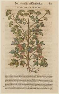 MATTIOLI-MATTHIOLI-LEVISTICO-VULGARE-SEDANO-DI-MONTAGNA-BOTANICA-BOTANY-1568