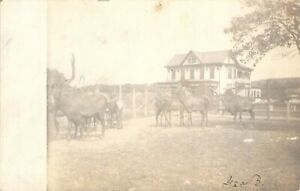 RPPC-Early-1900s-Herd-of-Elk-Victorian-House-Gingerbread-Trim-Cyko-Real-Photo