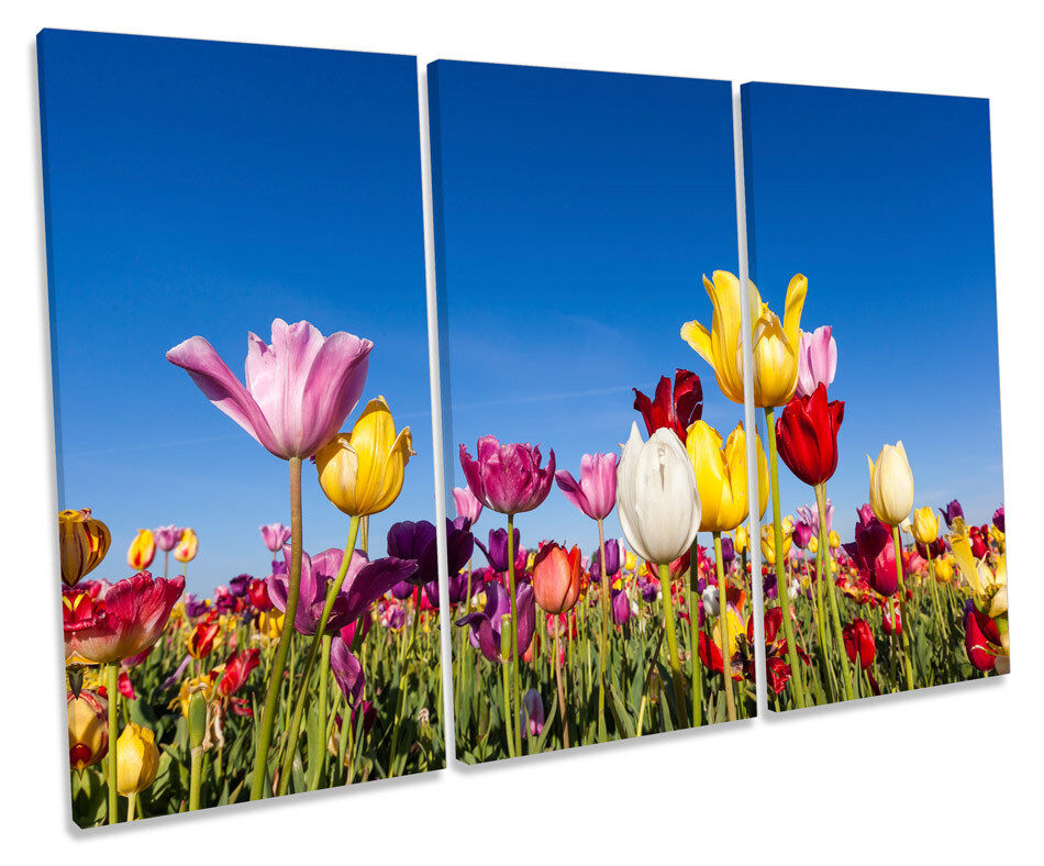 Tulip Floral Flower Field TREBLE CANVAS WALL ART Box Framed Picture