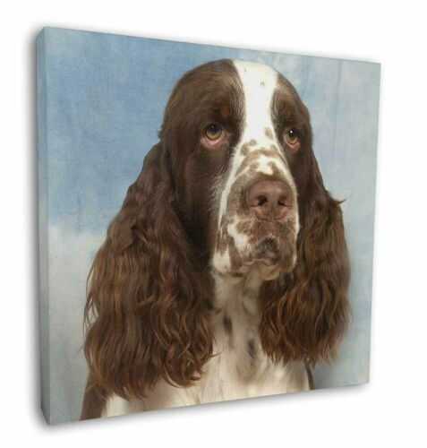 "Springer Spaniel 12/""x12/"" Wall Art Canvas Decor Picture Print AD-SS10-C12"