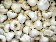 5lbs FRESH California Grown Garlic Bulb planting eating