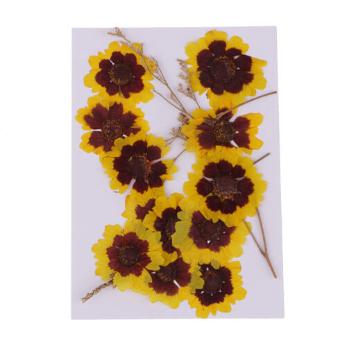 12pcs Real Pressed Flowers Dried Yellow Flower DIY Crafts Decoration