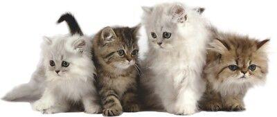 WANDTATTOO KATZEN KATZEN Kätzchen kleine Katze Vinyl Aufkleber Kinderzimmer