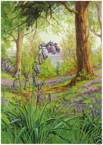M W Tarrant Wild Hyacinth MEDICI POSTCARDS