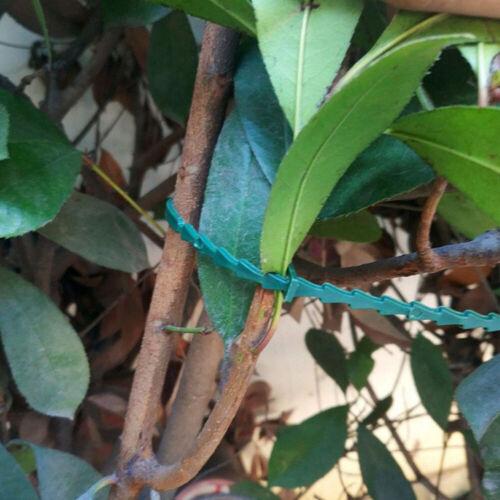 50Pcs Garden Cable Ties Plant Support Shrubs Tree Locking Nylon Plastic Ties
