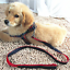 Harness-Leash-Collar-Jean-Style-Comfy-Dog-Pet-Puppy-Lead-Control-Heavy-Duty thumbnail 15