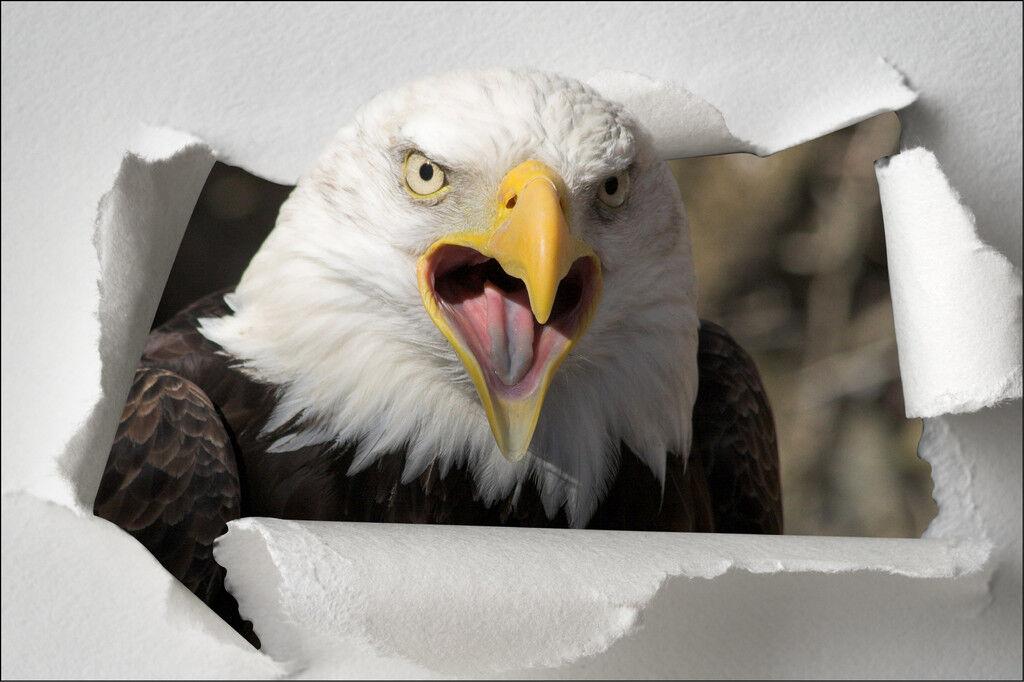 Aufkleber Schein Auge Tier Adler 100x66cm