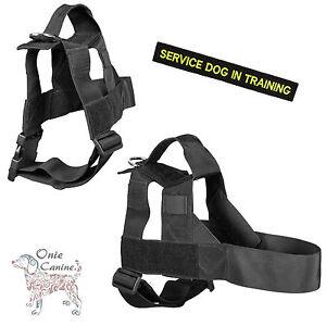 Onie Canine Search Harnais - Gb Avec Garantie À Vie 38mm Largeur De La Sangle