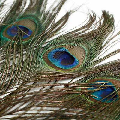 10x PEACOCK TAIL FEATHERS Feather NATURAL 15-30cm LONG Bouquet MILLINERY CRAFT