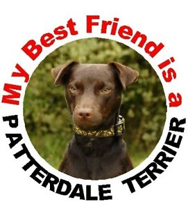 2-Patterdale-Terrier-Car-Stickers-No-3-By-Starprint-Auto-combined-postage