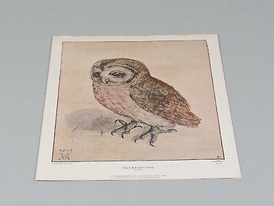 Fine Art Print//Poster Albrecht Durer The Little Owl