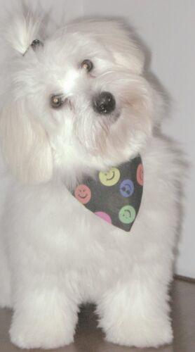 Nuevo Negro Jolly Roger Bandana perro se desliza sobre sus perros collar 2 Tamaños Disponibles