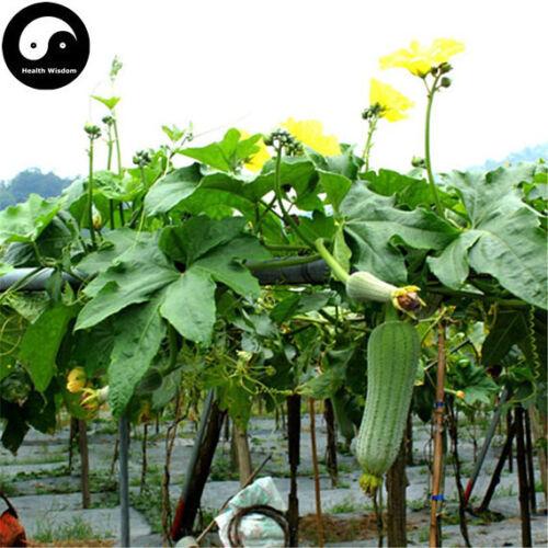 Buy Short Loofah Melon Seeds Plant Melon Vegetable Luffa Cylindrica