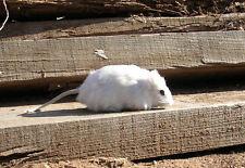 Realistic Lifelike White Rat Synthetic Fur Animal M1768W
