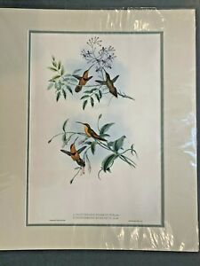 Original Hand Colored Lithograph Hummingbirds Gould Belted Hermit Bishop Hermit