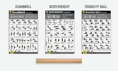 Workout Stability Ball BodyBuilding Fitness Gym Chart Poster 14x21 24x36 X-3335