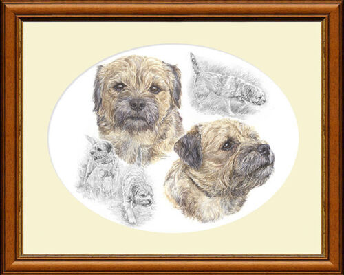 BORDER TERRIERS HEAD STUDY fine art Border Terrier dog print by Lynn Paterson