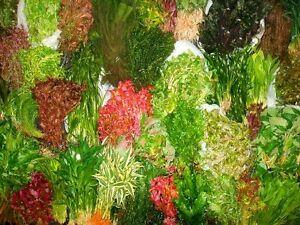 Bouquet Assortiment-nursery Choix (s/m/l Tailles, Total 100 Rond De Grappes)
