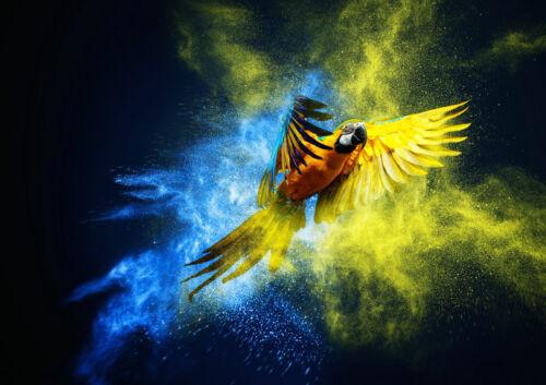 Modern Home Decor HD Print painting art on canvas Wall Art fantasy parrot HXT62