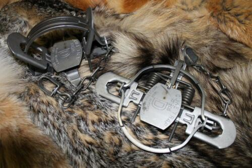 badger fox bobcat raccoon trap 12 DUKE #1 3//4 COILSPRING coyote