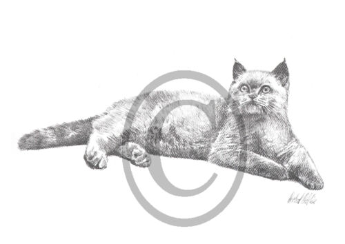 Graphitzeichnung Katzen Kunstdruck Katze0039GR Haustiere Tiere,