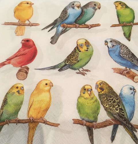 5  x   Paper party Napkins for Decoupage Birdies Budgies Napkin Art