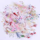 10 Color 3D Decoration Real Dry Dried Flower for UV Gel Acrylic Nail Art Tips