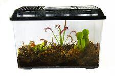 3 Live Adult Carnivorous Plants Deluxe Terrarium: Venus Fly Trap, Pitcher,Sundew