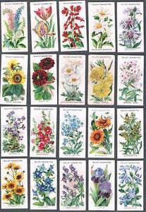 english garden flowers. Image Is Loading 1910-Wills-s-Cigarettes-Old-English-Garden-Flowers- English Garden Flowers N