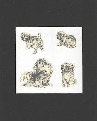 MATTED Morgan Dennis Dog Print Pekingese