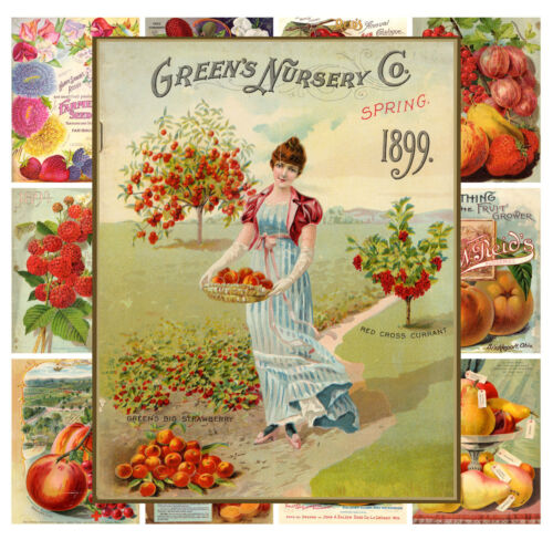 "13 pages 8/""x11/""//A4 Mini Posters Fruits Garden Vintage Seed Pocket Ads MP566"