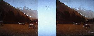 Photographie-stereoscopique-vaches-broutant-amp-Mont-Blanc-Chamonix-Annecy-c-1920