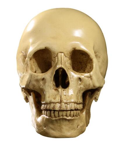 1:1 Human Skull Resin Model Skeleton Decoration   Tank Decor Craft #1