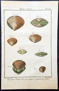 1789 Jean Baptiste Lamarck Antik concology Print Surf CLAM SHELLS-PL 257
