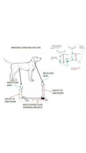 BREEDING STAND W COLLARS APBT PIT BULL BULLDOG FULLY ADJUSTABLE GROOMING