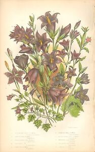1860 Ca ANTIQUE BOTANICAL PRINTANNE PRATT BELL FLOWER VARIETIES - <span itemprop=availableAtOrFrom>Holmfirth, United Kingdom</span> - Returns accepted Most purchases from business sellers are protected by the Consumer Contract Regulations 2013 which give you the right to cancel the purchase within 14 days after the da - Holmfirth, United Kingdom