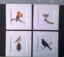 Watercolour Goldfinch, Wren, Blackbird,  Robin,  prints x 4, in mounts