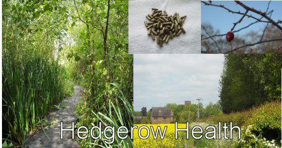 hedgerowhealth