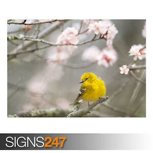 SMALL-YELLOW-BIRD-SPRINGTIME-AE909-Photo-Picture-Poster-Print-Art-A0-to-A4