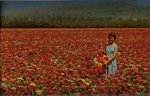 10vf-Postcard-Burpee-Seeds-Burpeena-Giant-Zinnias