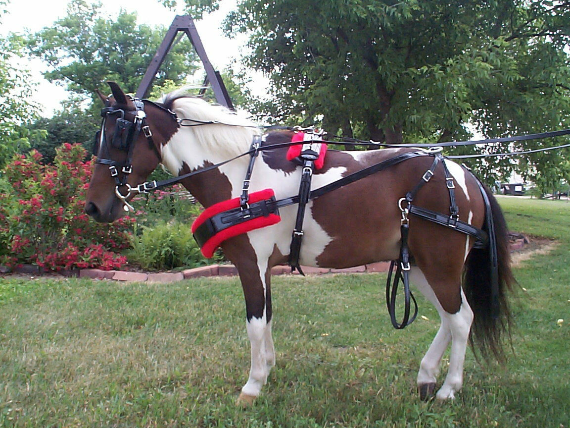 BIOTHANE  MINI AND SMALL PONY HARNESS, AMISH MADE WITH STAINLESS HARDWARE, NICE