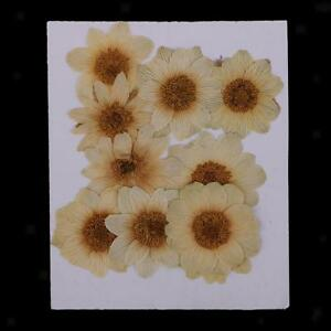 10-Pcs-Pressed-ICE-Flowers-Dried-Flowers-for-Floral-Art-Scrapbooking-Craft