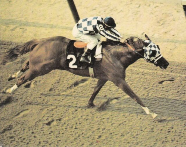 SECRETARIAT 1973 BELMONT WINNER HORSE RACE 8X10 PHOTO PICTURE #1