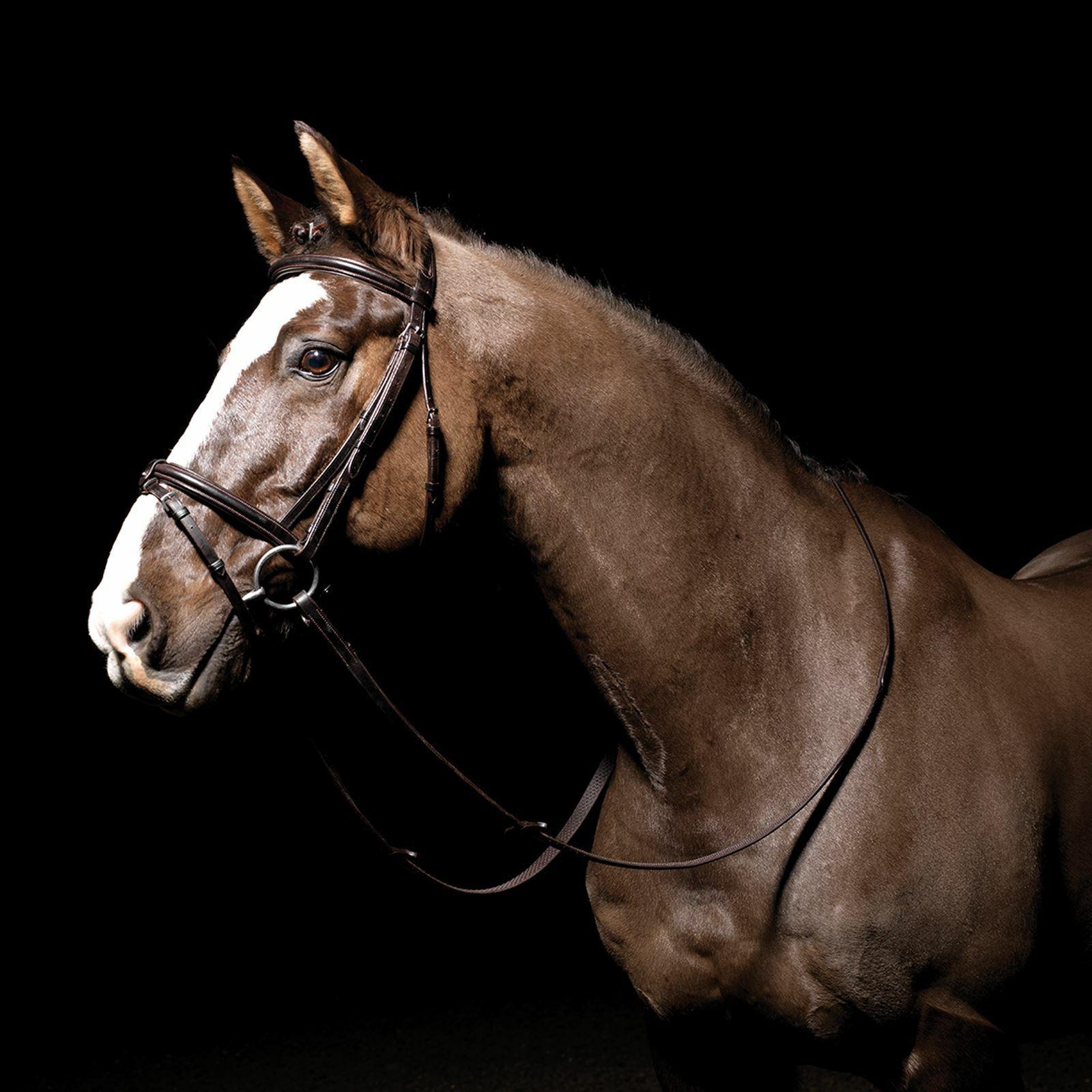 Nuevo   comodidad De Cuero Marrón Pony CALDENE Acolchado Flash Brida & riendas RRP